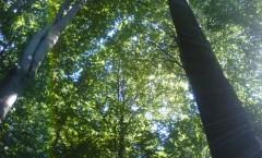Rezervatia-forestiera-(tisa)-Padurea-Tudora-20110627163834