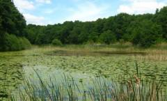 lacul-cu-nuferi-ipotesti